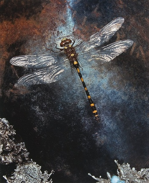 Dragonfly. Photograph that looks like painting, by American artist and photographer Jo Whaley