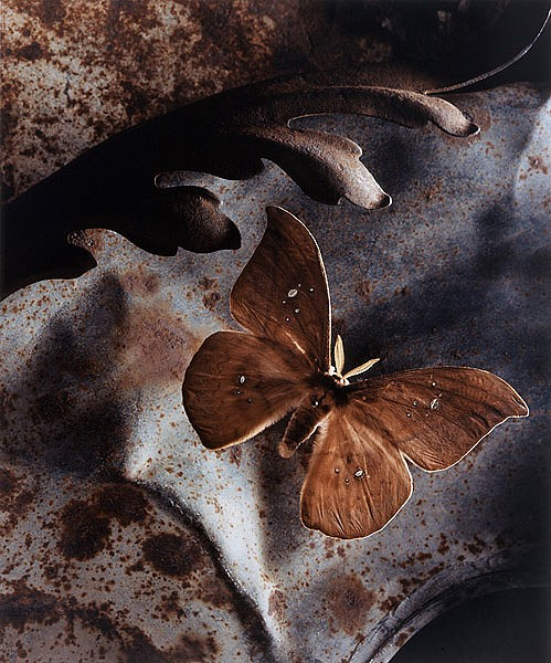 Inspired by butterfly Photography by American artist and photographer Jo Whaley