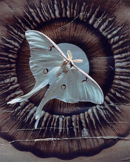 Moth. Photograph that looks like painting, by American artist and photographer Jo Whaley
