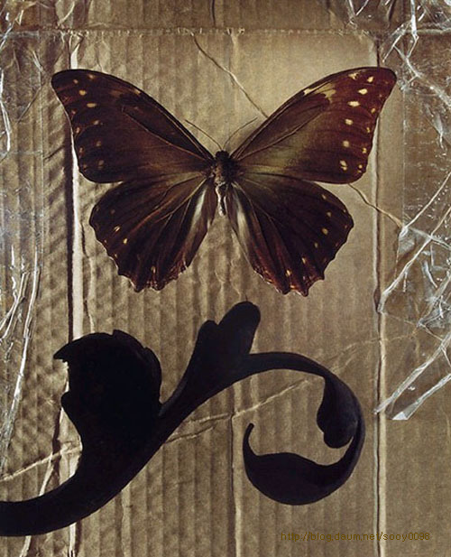 Brown butterfly on a cardboard. Photograph that looks like painting, by American artist and photographer Jo Whaley