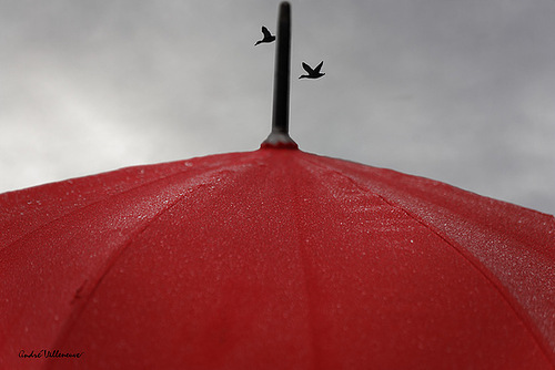 Birds are flying over the red umbrella. Work by Canadian photographer Andre Villeneuve