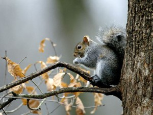 Squirrels are mostly vegetarian but sometimes they do eat small insects, small birds or bird eggs. They also love seeds, tree buds, berries, etc
