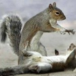 Squirrels are not sexually dimorphic, that is, both males and females are of the same size.
