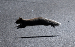 Squirrels are so fast that they can run at the speed of 20 miles per hour.