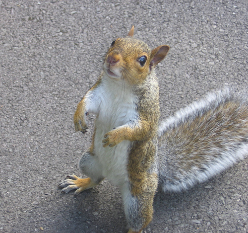 Squirrels are very hardworking, swift, and independent mammals. They say that squirrels, especially the black ones, are a sign of good luck.
