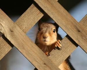 Squirrels interesting facts