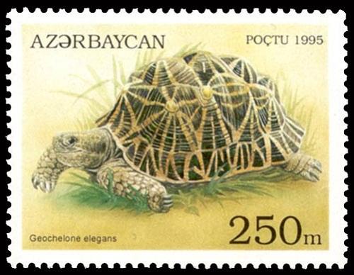Starry turtle on Azerbaijani stamp