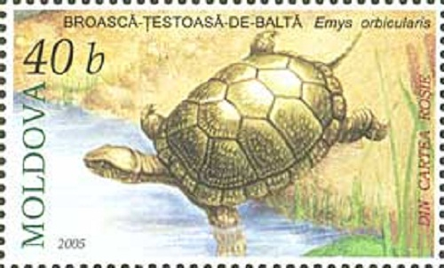 Tortoise in art and heraldy