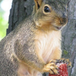 The position of the eyes of a squirrel is such that it can also see things at the back, which makes it so alert.