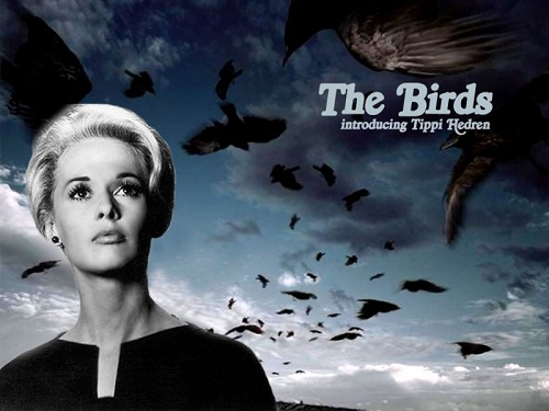 Iconic film The birds with Tippi Hedren