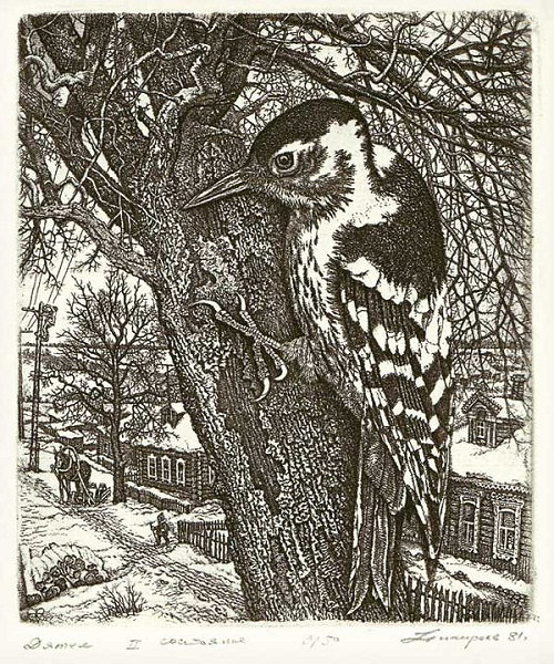 Woodpecker. Etching graphics by Russian artist Stanislav Nikireev