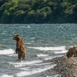 Little bears stay on the shore