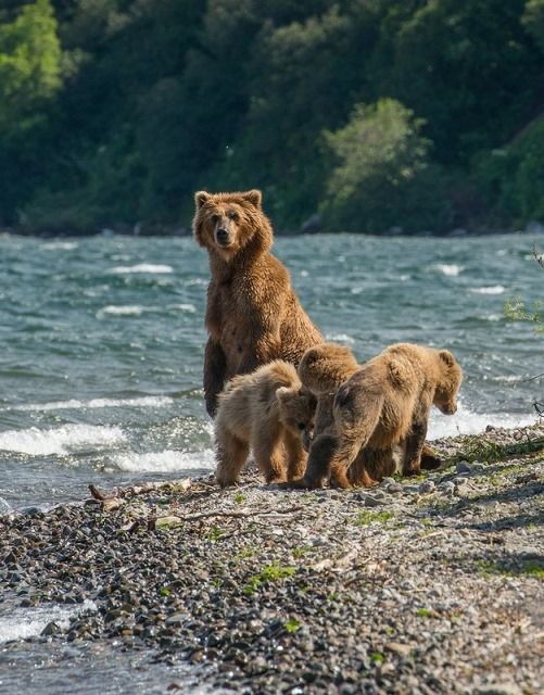 Mother bear with her cubs