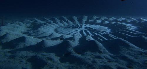fish's beautiful underwater artwork