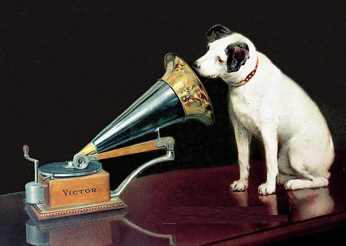 Dog looking at and listening to the gramophone.