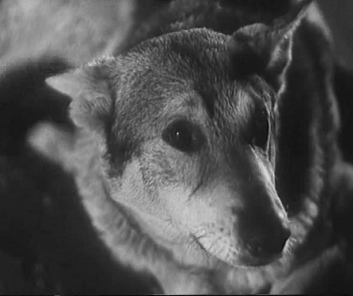 """White Fang"" 1946 movie"