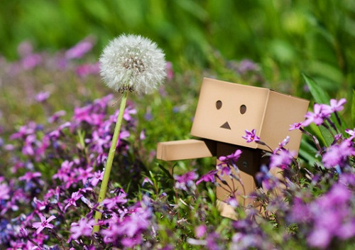 Dandelion and a cardboard man Danbo