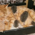 Cat and hedgehogs story with a happy ending