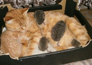 Cat and hedgehogs-Story with a happy ending
