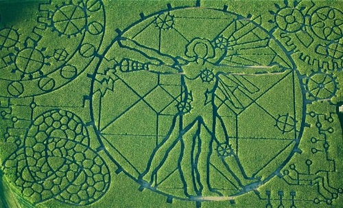 Labyrinths in corn fields for Halloween. Vitruvian Man by Leonardo La Vinci