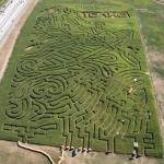 Corn field labyrinths