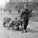 Dog team carries a wounded soldier, 1944
