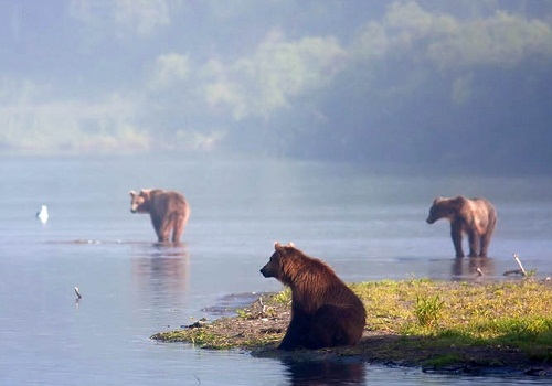 Three bears ready to start fishing. Kamchatka region, Russia. Photographer Sergei Krasnoshchekov