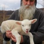 A little lamb