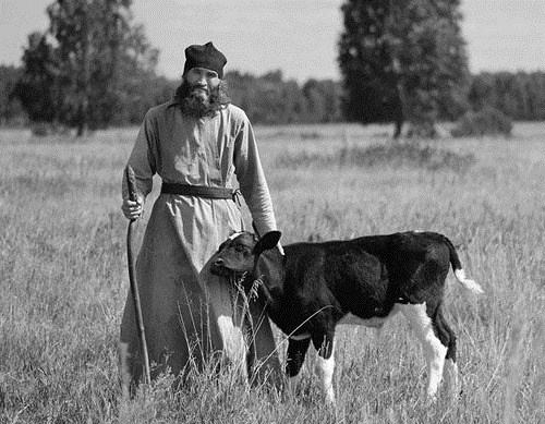 With a calf. orthodox christian monks