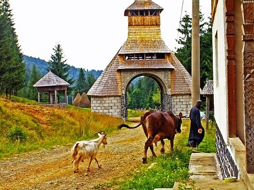 Domestic animals among orthodox Christians from the Ruisi-Urbnisi bishoprics
