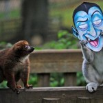 Lemurs and monkeys playing with Halloween masks