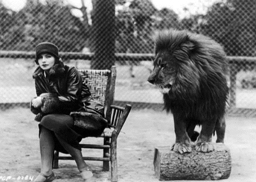 Lions of Metro-Goldwyn-Mayer