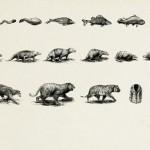 World Wildlife Fund ads