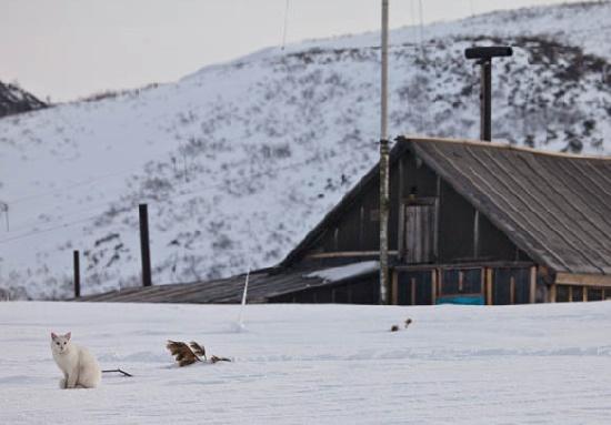 Syoma, waiting for his friend – a fox. Kronotsky Nature Reserve, Kamchatka peninsula, Russia