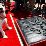 25 June 2012, Uggie pawprints immortalized in cement