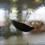 umbrella photo contest