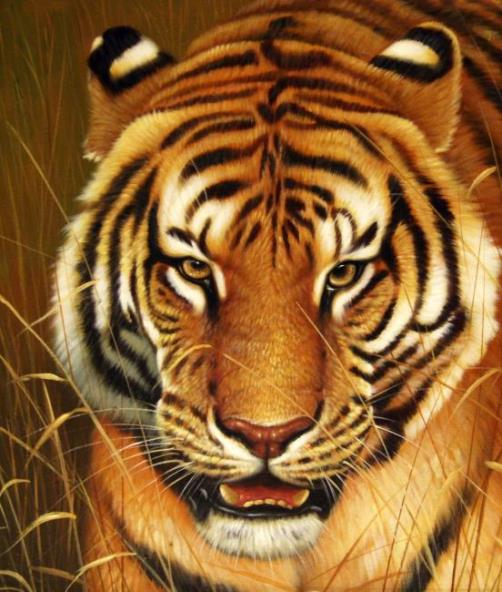 Tiger. Oil on canvas, 2012. Painting by Neapol based artist Tina Augusto Bruno