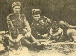 dogs at war, photograph of WWII