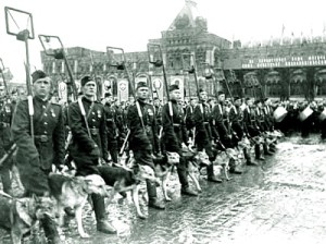 military dogs during parade in Moscow