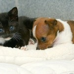 Two adorable babies orphaned puppy Buttons and kitten Kitty who think they're sisters