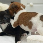 Happy together spotted puppy Buttons and black kitten Kitty