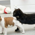 Never feel bored orphaned puppy Buttons and kitten Kitty