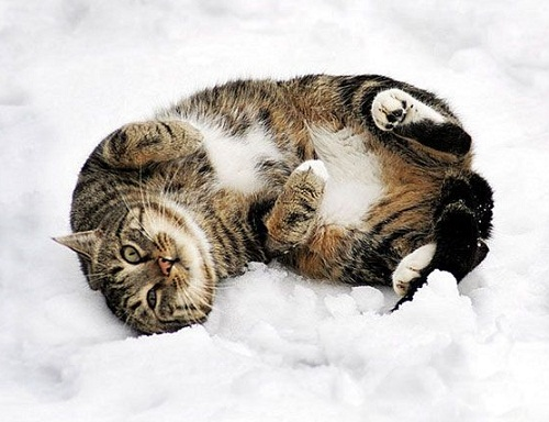 Many cats are the death of the mouse. Kaspar Hauser