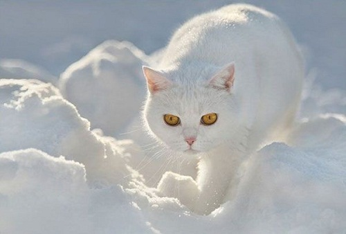 Cats are intended to teach us that not everything in nature has a function. Garrison Keillor