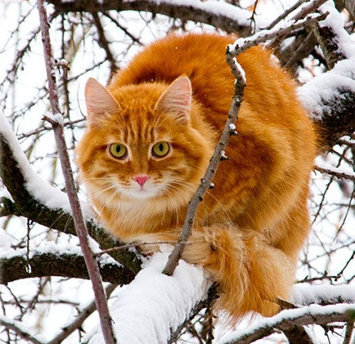 As anyone who has ever been around a cat for any length of time well knows, cats have enormous patience with the limitations of the human kind. Cleveland Amory