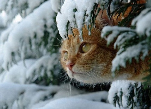 I grew up with such an affinity to cats. I adore the way that they think and operate. Guy Pearce