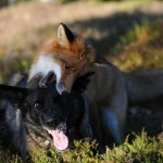 Tinni the dog and Sniffer the fox