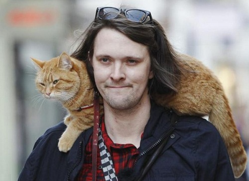 Bob stray cat who saved a man