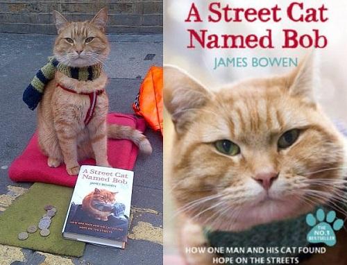 Bob stray cat
