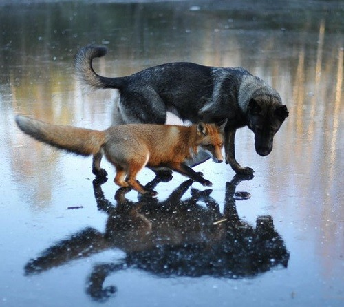 Friendship of Tinni and Sniffer. Photographer Torgeir Berge
